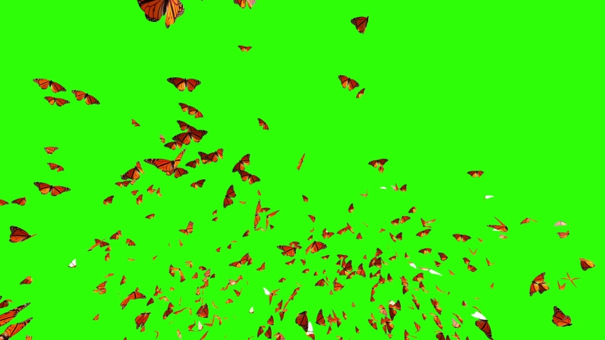 Amazing Millions Of colorful Butterfly flying from camera isolated with alpha mask, perfect for compose over your footage or logo, butterfly in 4K, perfect for nature video clip | Shutterstock HD Video #1031232086