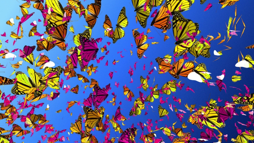 Amazing  Millions Of Butterfly, Butterflies Flying on summer blue sky Background. Beautiful 3d animation of colorful butterfly isolated.