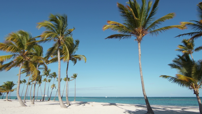 Wild isolated beach with white sand and azure shore. Coconut palms. Blue sky. The best beaches of the planet. Dominican Republic, Punta Cana | Shutterstock HD Video #1031275832