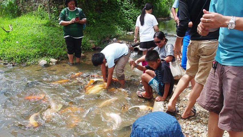 Ranau, Sabah, Malaysia: 3 Jun 2019, Fish Spa at Kampung Bambon, Marakau, Ranau, Sabah | Shutterstock HD Video #1031282408