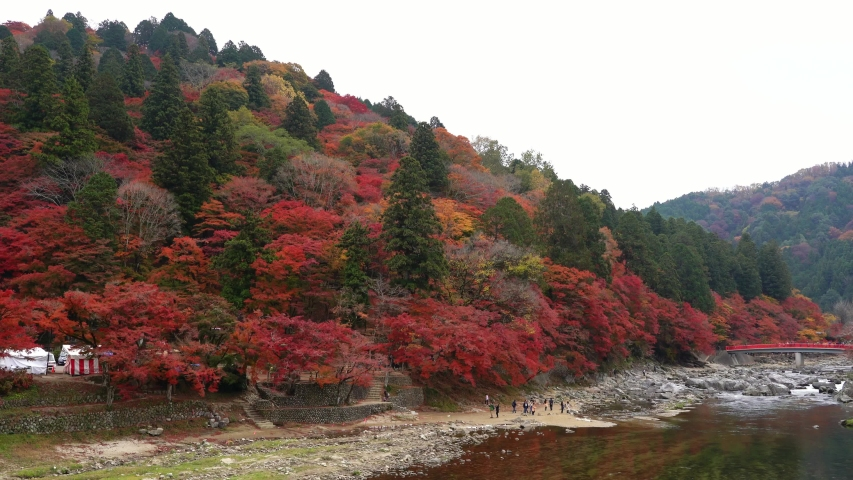 Korankei valley outside Nagoya famous for fall colors. tourists enjoy on waterfall, Taigetsukyo red bridge with red maple trees colorful fall foliage autumn leaf festival at Aichi, Chubu Region, Japan | Shutterstock HD Video #1031287430