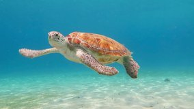 Swimming green sea turtle and shallow blue ocean with white sand. Underwater animal, video from scuba diving in the tropical sea. Cute marine wildlife.