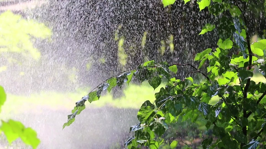 Garden watering and water drops on the trees. | Shutterstock HD Video #1031477270