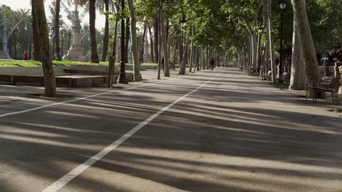 Bicycles riding in the park early morning. Bicycle road and white line on it. Summer in the city. Barcelona in June, tourist riding bikes. Green trees and soft early hours light.