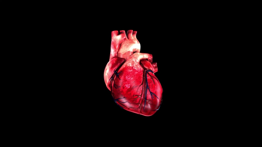 Animation 3d Of Heart Anatomy