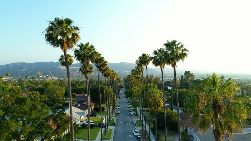 Amazing drone pedestal up sunset view of Glendale, Los Angeles tall palm tree street Royalty-Free Stock Footage #1031727413