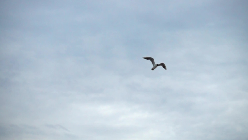 Flight of a seagull. Slow motion. #1031828756