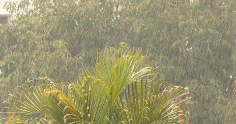 Rain falling in the garden