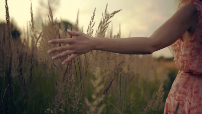 Female Enjoying Nature At Sunrise.Woman Walking On Summer Field.Woman Hands Touching Flowers.Hand Touches Grass In Wheat Field.Beautiful Woman In Love On Meadow.Sun Through Hands.Girl Relax On Morning