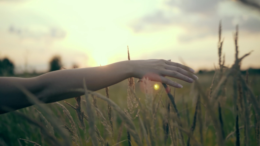 Woman Walking On Summer Field.Woman Hands Close Up Touches Flowers.Hand Touches Grass In Wheat Field.Sun Through Hands.Girl Relax On Morning.Female Enjoying Nature At Sunrise.Beautiful Woman On Meadow