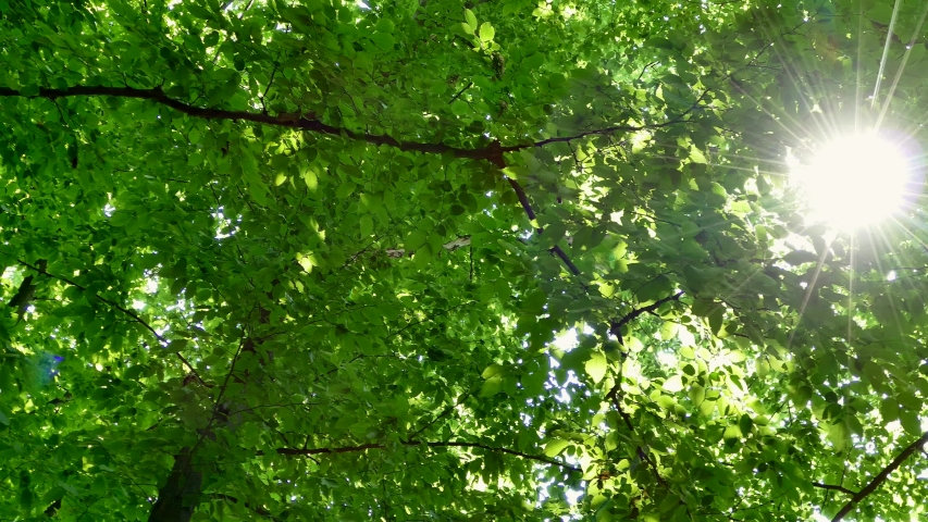 Green summer forest. The sun's rays shine through the branches of trees with green leaves. Clean ecology. | Shutterstock HD Video #1031898302
