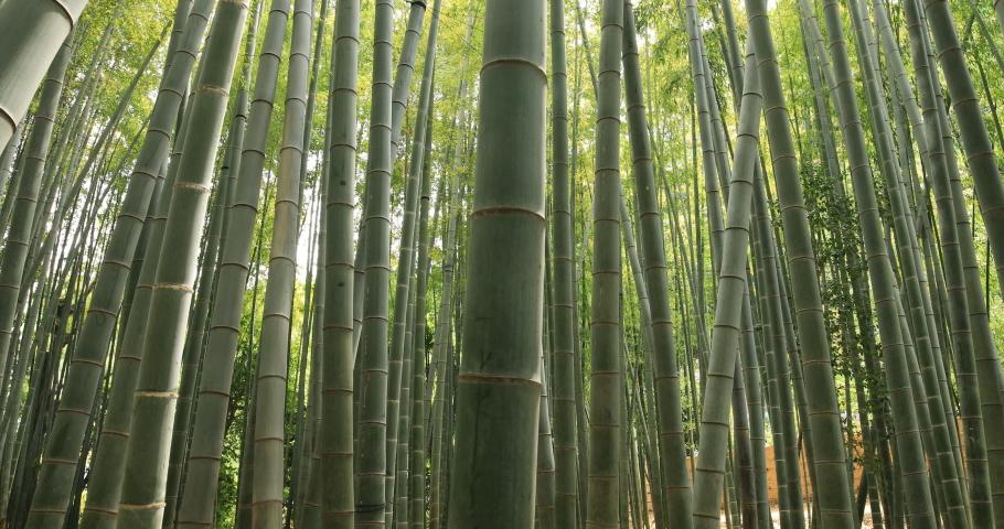 Bamboo forest at the traditional guarden handheld tilt. Kamakura district Kanagawa Japan - 04.28.2019   | Shutterstock HD Video #1031932544