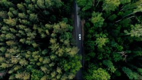 Aerial top down 4k view of white car driving on country road in forest in the evening at twilight. Cinematic drone shot flying over gravel road in pine tree forest