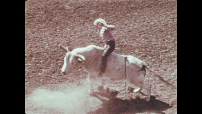 1970s: Cowboy rides bull. Cowboys rope cattle. Cowboy jumps off horse, tackles cow.