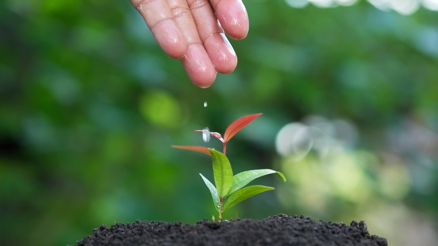 Slow motion male hand watering young plant. Beautiful bokeh background   Shutterstock HD Video #1032140000