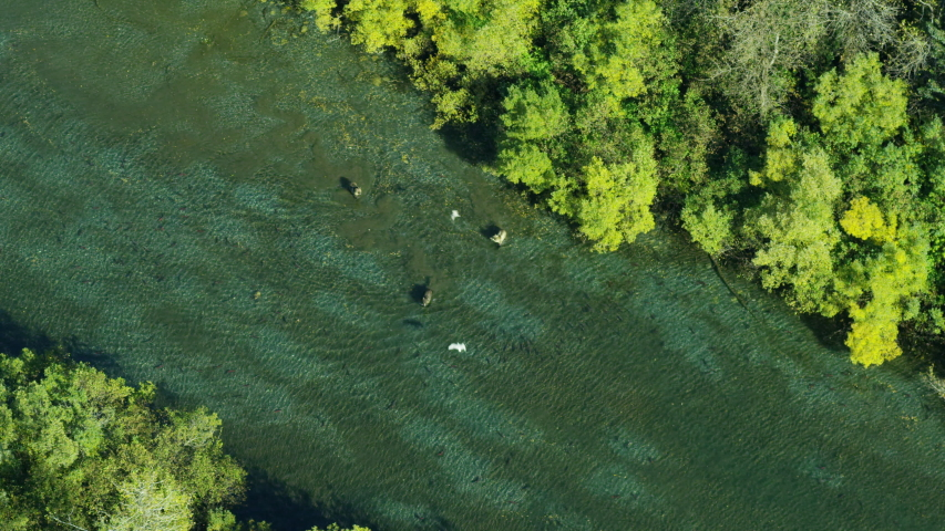 Aerial overhead view of Alsek River Alaskan brown bears hunting for salmon in fresh water forest Wilderness Southern Alaska USA RED WEAPON | Shutterstock HD Video #1032152918
