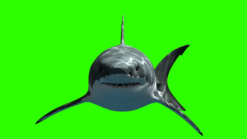 Great White Shark Megalodon Slowly Swims to the Camera on a Green Background. Beautiful 3d Animation with a Light and Depth Passes. 4K