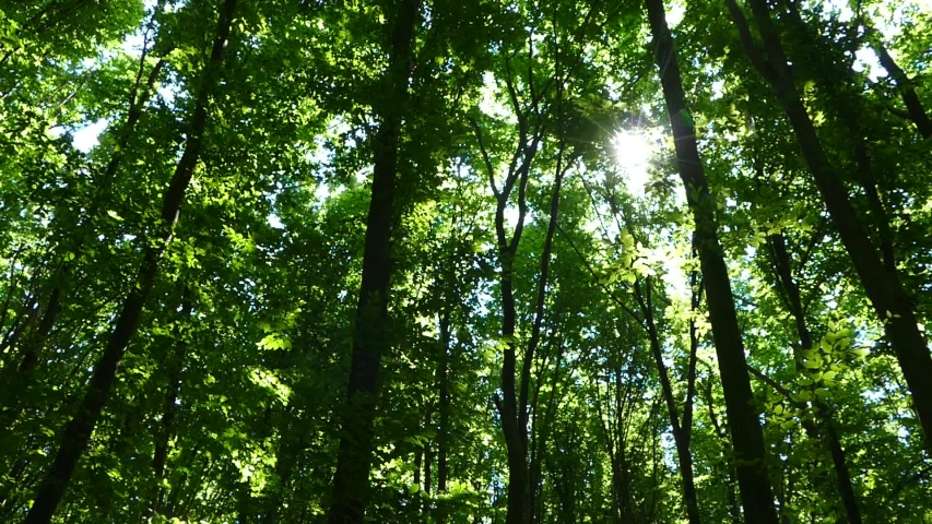 Green summer forest. The sun's rays shine through the branches of trees with green leaves. Clean ecology. | Shutterstock HD Video #1032244349