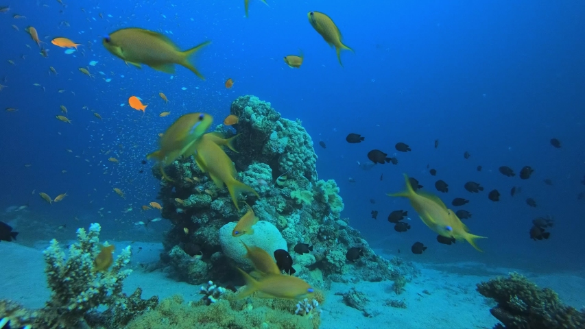 Underwater Sea Tropical Life. Tropical underwater sea fishes. Underwater fish reef marine. Tropical colorful underwater seascape. Soft hard coral broccoli. Reef coral scene. Coral garden seascape. | Shutterstock HD Video #1032345896