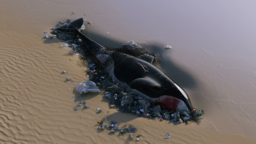 Killer Whale Dead by Ocean Pollution