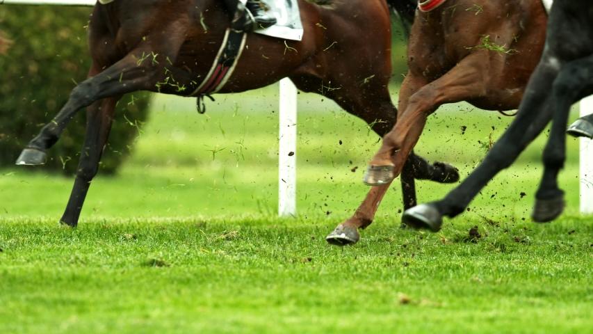 Super Slow Motion Shot of Running Horses at 1000fps.
