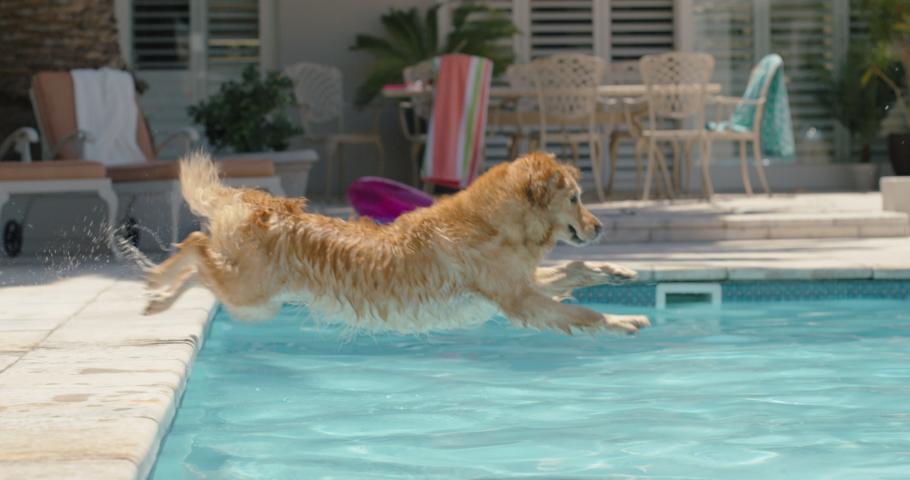 Happy dog jumping in swimming pool playing game fetching toy ball golden retriever playfully enjoying summer cute furry canine having fun splashing 4k | Shutterstock HD Video #1032448919