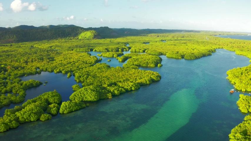 Anavilhanas archipelago, flooded amazonia forest in Negro River, Amazonas, Brazil