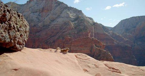 Desert Chipmunk on Canyon Rocks, Ground Squirrel, Desert Wildlife