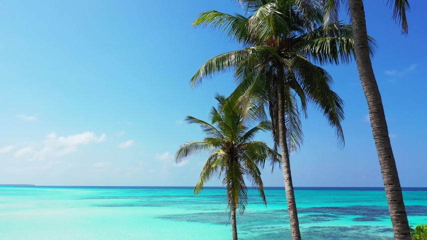 Palm Tress Zoom In With Stock Footage Video 100 Royalty Free