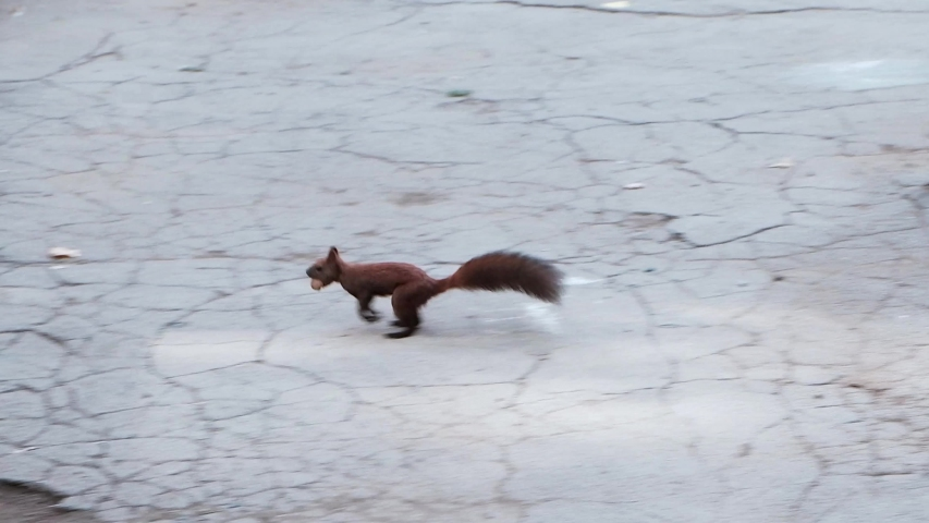 Squirrel running in the park and eating nuts #1032588044