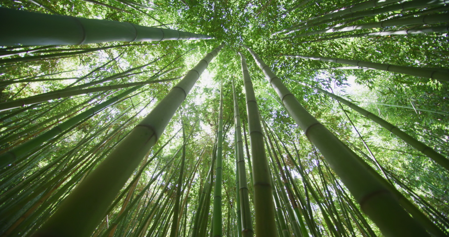 Top view of scenic bamboo forest used as renewable sustainable energy resource and different  types of eco -friendly green products.