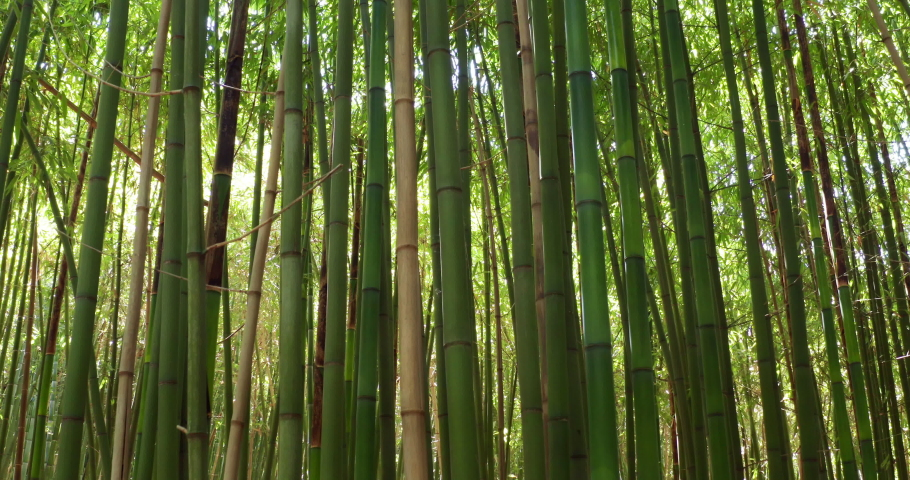 Close up of scenic bamboo tree forest used as renewable sustainable energy resource and different  types of eco -friendly green products. | Shutterstock HD Video #1032602096