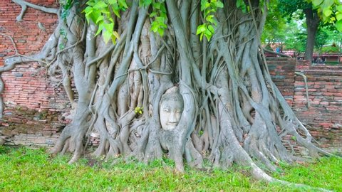 The ancient temple of Wat Mahathat with most popular site of Ayutthaya - the extant head of Buddha statue, entwined in banyan tree roots, Thailand