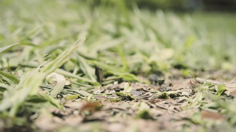 A line of busy ants from a colony (tiny industrious insects) carrying food and other stuff to the nest. Macro detail shot, low POV.