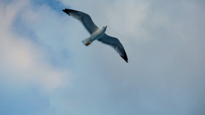Seagulls flying against the blue sky. Flock of birds floating on air currents of wind. Big seagull soaring over the Mediterranean sea. Greece. Slow motion. HD   Shutterstock HD Video #1033098254