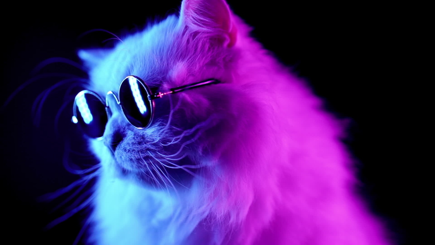 Portrait of white furry cat in fashion eyeglasses. Studio neon light footage. Luxurious domestic kitty in glasses poses on black background. | Shutterstock HD Video #1033213925