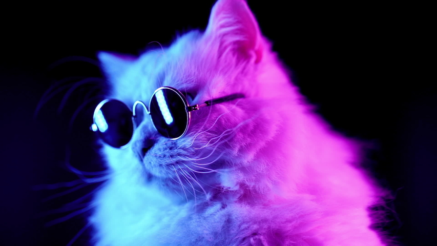 Portrait of white furry cat in fashion eyeglasses. Studio neon light footage. Luxurious domestic kitty in glasses poses on black background. | Shutterstock HD Video #1033213934