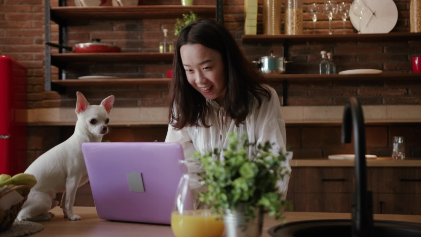 Smiling fascinating young woman doing high-fiving with little dog, using violet laptop. Terrific pet. Bushy coat. Extremely trainable dog. Indoors. Good mood. Royalty-Free Stock Footage #1033220912
