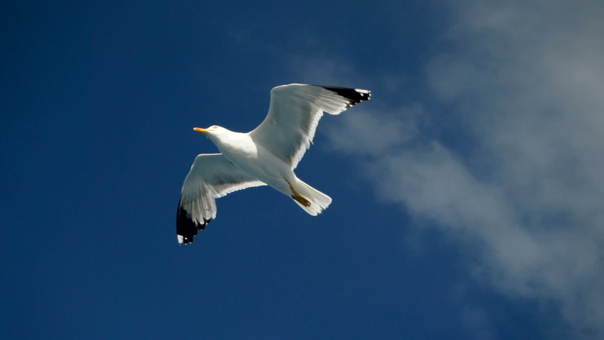 Seagulls flying against the blue sky. Flock of birds floating on air currents of wind. Big seagull soaring over the Mediterranean sea. Greece. Slow motion. HD | Shutterstock HD Video #1033273778