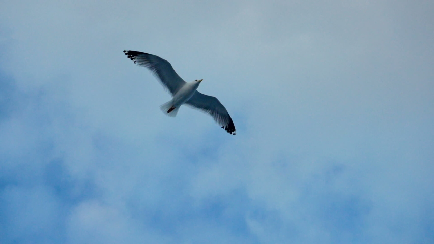 Seagulls flying against the blue sky. Flock of birds floating on air currents of wind. Big seagull soaring over the Mediterranean sea. Greece. Slow motion. HD   Shutterstock HD Video #1033273838