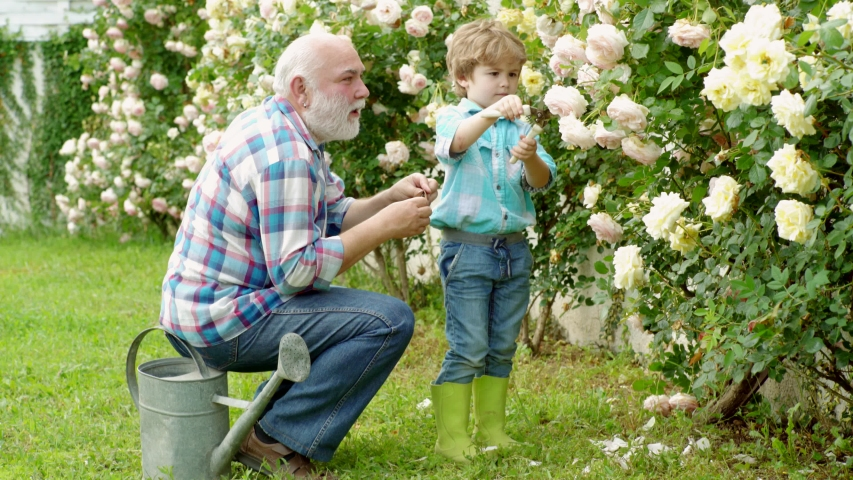 Growing plants. Family generation and relations concept. Child are in the garden watering the rose plants. Grandfather. Senior man with grandson gardening in garden | Shutterstock HD Video #1033327601