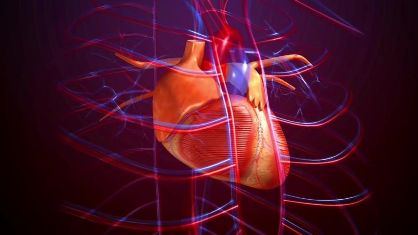 4K 3D render footage of heart beat | Shutterstock HD Video #1033385507