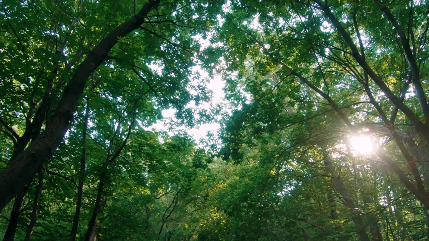 Looking up walking in a forest with the sun shining | Shutterstock HD Video #1033386821