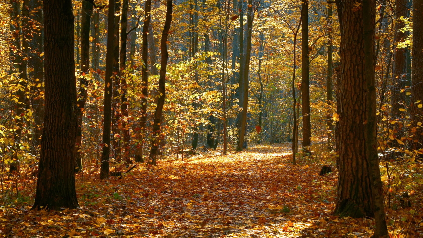 Pathway in the bright autumn forest | Shutterstock HD Video #1033398497