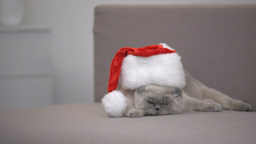 Angry cat in Santa hat turning away from camera, discounts on Christmas gifts | Shutterstock HD Video #1033510463