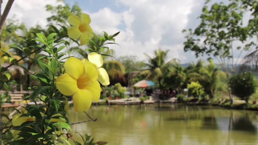 View of a beautiful lake with a flower in the foreground.