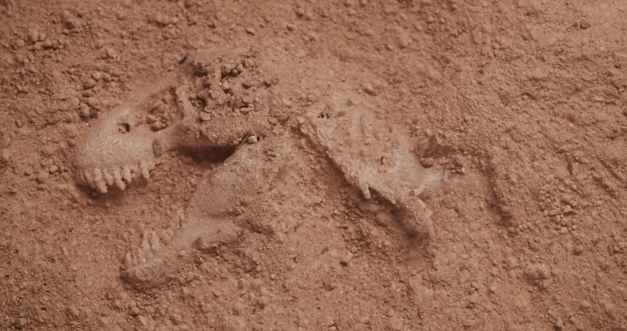 Dinosaur fossil unearthed from dirt