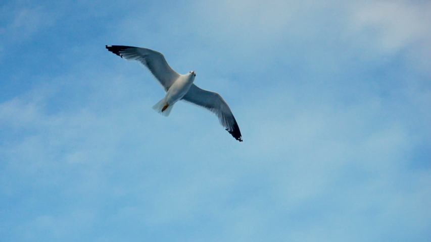 Seagulls flying against the blue sky. Flock of birds floating on air currents of wind. Big seagull soaring over the Mediterranean sea. Greece. Slow motion. HD   Shutterstock HD Video #1033598285