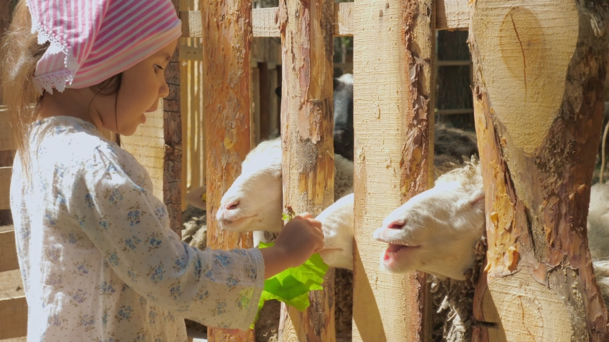 Little cute girl feeds the sheep on the farm with carrots and burdock leaves. Summer sunny day. | Shutterstock HD Video #1033603226