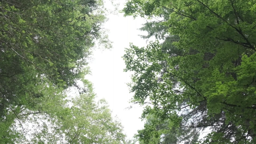 Slow motion, fronds of trees seen from below | Shutterstock HD Video #1033638533